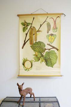 Oude botanische schoolplaat. Vintage schoolkaart v - Soekis