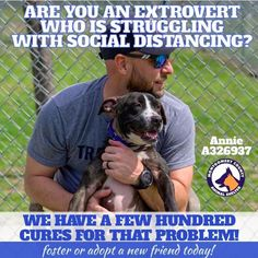 Help Extroverts by marketing fosters or adoptable pets as the company they need, like Montgomery County Animal Shelter in Texas Montgomery County, Marketing Communications, Animal Shelter, New Friends, The Fosters, Adoption, Texas, Photoshoot, Dogs