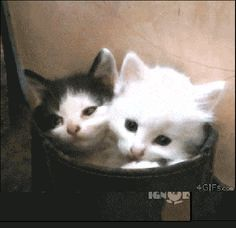 Katzengeschwister (gif)