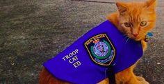 Ed, un chat errant a trouvé du travail à la police de l'Etat australien de la Nouvelle Galles du Sud