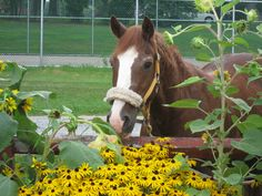 Memphis, our oldest horse, is 38 years old!