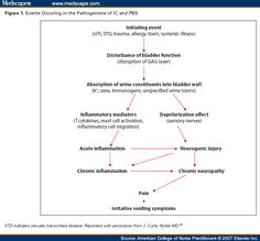 Interstitial Cystitis: Early Identification in Primary Care Settings: Pathophysiology
