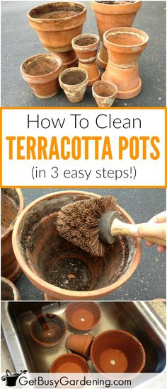 How To Clean Terracotta Pots (Clean Clay Pots In 3 Easy Steps!) - Cleaning crusty old terracotta pots is easy, and doesn't take a lot of time. Here's how to clean terracotta pots in 3 simple steps! Indoor Gardening Supplies, Organic Gardening Tips, Container Gardening, Organic Soil, Vegetable Gardening, All You Need Is, Cactus Care, Terracotta Plant Pots, Clay Pot Crafts
