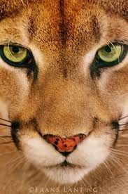 animal face - Google Search