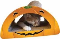 Small Round Pumpkin Combo Cat Scratcher