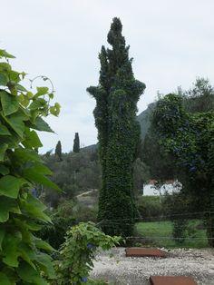 Korfu: Wunderschöne Landschaft