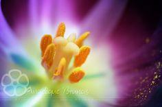 :: Flower' :: by Liek.deviantart.com on @deviantART
