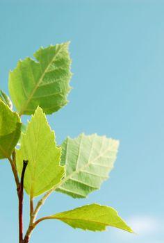 Sunny day leaf