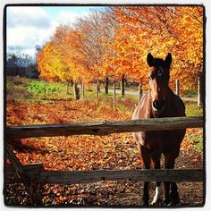Gorgeous autumn day with horse.  courtesy of www.countytshirts.com