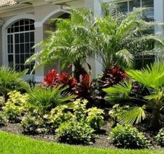 Get tips for enjoying a good looking Florida Gardening, landscape, or front yard. Our professionals let you know everything necessary to Florida Gardening Inspiration Florida Landscaping, Florida Gardening, Tropical Landscaping, Tropical Garden, Landscaping Design, Landscaping Plants, Landscaping Around Trees, Landscaping With Rocks, Front Yard Landscaping