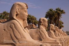 https://flic.kr/p/dp1DPs | Luxor, Temple, Sphinx Alley | Luxor Temple is an ancient Egyptian temple complex located on the east bank of the Nile River and was founded in 1400 BCE. For centuries Thebes (today Luxor) was once known as the capital of the known world. To the rear of the temple are chapels built by Tuthmosis III, and Alexander. During the Roman era, the temple and its surroundings were a legionary fortress and the home of the Roman government in the area.  Together with…