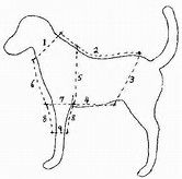 Image result for Free Large Dog Coat Pattern