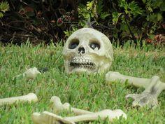 skull and bones a skeleton on the ground https://www.facebook.com/freespiritphoebe https://www.facebook.com/freespiritphoebe