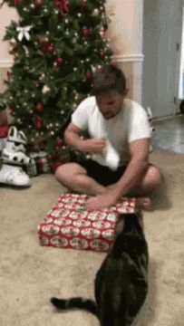 New party member! Tags: cat christmas fail animals being jerks cat attack