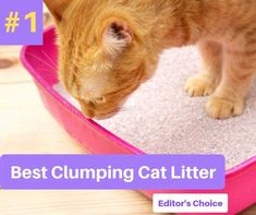 We actually found the best clumping cat litter. Although it's optimized to cater to a multi-cat household, there's no reason not to use it for your one and only kitty. Tidy Cat Litter, Best Cat Litter, Tidy Cats, Litter Box, Fat Cats Bowling, Cat Coloring Page, Cat Urine, Cat Drinking