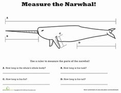 Second Grade Math Worksheets: Measure Length: Narwhal!