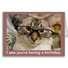 Birthday Card Cat Funny