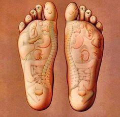 En el pie tenemos reflejados todos los organos de nuestro cuerpo a traves de las terminaciones nerviosas. Desde los masajes de Reflexologia tratamos tanto problemas fisicos como psiquicos
