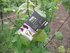 Pass-Age à travers le monde ... vignes alsaciennes © Pass-Age