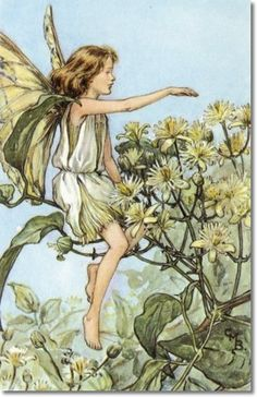 Cicely Mary Barker - Flower Fairies of the Summer - The Travellers Joy Fairy Painting