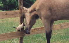 """""""What a loving, gentle encounter between this horse and a tiny barn kitten,"""" says Sharon Savastio. country-magazine.com"""