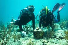 EarthEcho International | Ocean Acidification: Breaking It Down