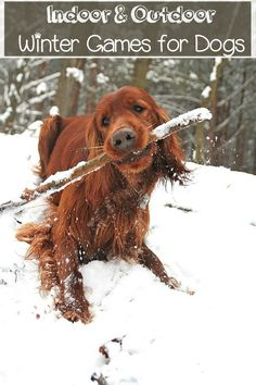 Don't let the chill keep you and Fido from staying fit! Embrace the season with these fun indoor and outdoor winter games for dogs!