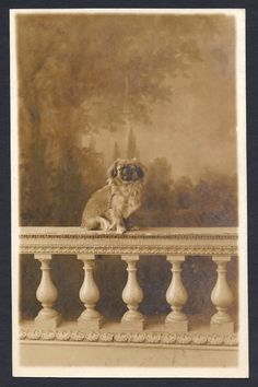 1910 photo - not sure if it is a Tibetan spaniel.looks like Scouts great grandpa Spaniel Breeds, Spaniel Dog, Dog Breeds, Beautiful Dogs, Animals Beautiful, Cute Animals, I Love Dogs, Puppy Love, Pekingese Dogs