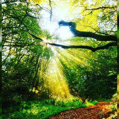 Feliz Domingo amigos. Un nuevo Día comienza a levantarnos se ha dicho. http://ift.tt/1TeG0nJ ================================ #frases #motivation  #entrepreneurs #business #negocio #weekend #enjoylife