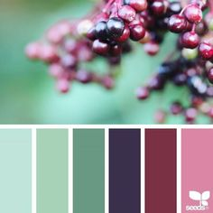 today's inspiration image for { color nature } is by @derkleineklecks ... thank you, Julia, for another amazing #SeedsColor image share!