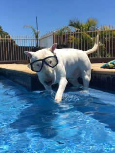 """""""I use doggles in my swimmy pool so I don't get water in my eyes!"""""""