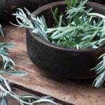 Img Good To Know, Planter Pots, Madagascar, Medical, Hot Flashes, Medicinal Plants, Students, Mondays, Medicine