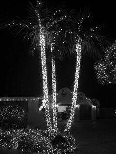 decorating extraordinary exterior christmas decoration feats palm tree with lighting on the rod endearing christmas lights house ideas for special moment - Palm Tree Christmas Decorations