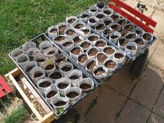 Make your own seed starter pots from newspaper---no need for peat pots