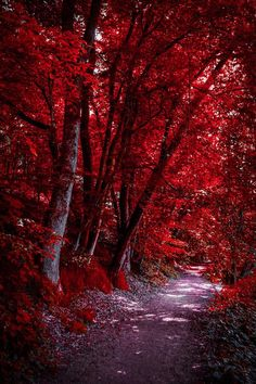 Through the Bloodred Forest…. by Aenea-Jones The post Through the Bloodred Forest…. by Aenea-Jones autumn scenery appeared first on Trendy. Beautiful Nature Wallpaper, Beautiful Landscapes, Beautiful Images, Trees With Red Leaves, Landscape Photography, Nature Photography, Image Nature, Autumn Scenery, Aesthetic Colors