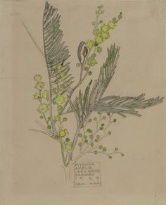 Charles Rennie Mackintosh - Mymosa