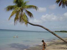 Plage Sainte-Anne - Photos de vacances de Antilles Location #Martinique