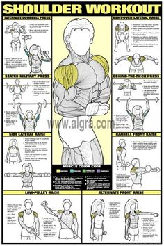 Bruce Algra's Shoulder Workout Poster presents the most effective weight training exercises to develop the deltoid muscles for men and women. Each of eight exercises instruct and illustrate how to strengthen and shape the shoulder muscles in a quick and safe manner. This fitness routine and body building poster is full of great education and will enhance any weight room at home or at the health club. by proteamundi