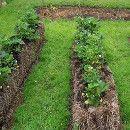 ¿Cómo se cultiva en pacas o fardos de paja? ecoagricultor.com