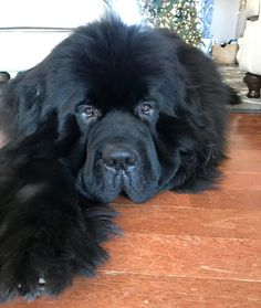 Why does Sunday have to be over? Credit to : @chewie.the.newfie DoubleTap & Tag a Friend Below⤵ Follow us if you love Newfoundland  ❣  Update videos everyday ❤