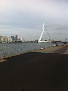 Erasmusbridge #wilhelminapier #rotterdam           12-10-2013 #GM