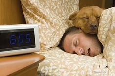 67 Best Pets Amp Daylight Saving Time Images In 2019