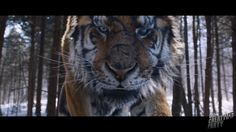 #4thCreativeParty presents their #VFX work especially an impressive tiger for #TheTiger - #AnOldHuntersTale: http://www.artofvfx.com/the-tiger-an-old-hunters-tale-vfx-breakdown-by-4th-creative-party/