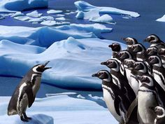 Funny and Sweet Penguin Photography-AmO Images-AmO Images