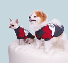 Unexpected friendships are the best ones and twinning in their Milan Polo Pullover Unexpected Friendship, Dog Fashion, Zurich, Pomeranian, Geneva, Dog Training, Chihuahua, Cute Dogs