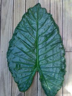 My version (10) - Cement leaf. What fun! I have made several of these now. Thanks Pinterest!