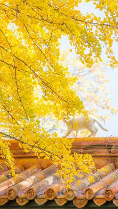 Yellow Aesthetic Pastel, Aesthetic Pastel Wallpaper, Scenery Wallpaper, Nature Wallpaper, Aesthetic Wallpapers, Free Android Wallpaper, Nature Collection, Inspirational Wallpapers, Aesthetic Collage