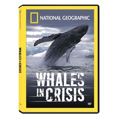 Whales in Crisis DVD  http://www.techtimes.com/articles/18130/20141017/drones-offer-glimpse-into-life-of-orca-whales.htm