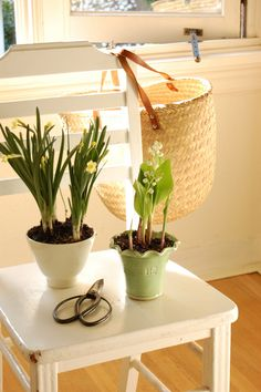 Enjoy Color + Fragrance in Winter by Forcing Spring Bulbs Inside