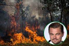 The actor and environmental activist's social media posts about the destruction of the Leuser Ecosystem have angered the government.